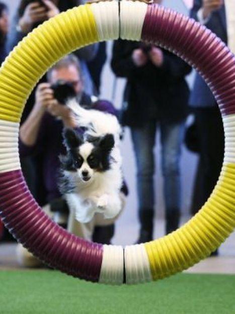 Выставка собак / © Getty Images