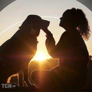 История Хатико из Кривого Рога: стала известна судьба собаки, которая 3 года провела на могиле хозяина