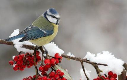 Новий рік Україна зустріне із сніговими заметами, хуртовинами, сильними морозами та ожеледицею