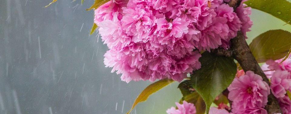 Прогноз погоды на 28 мая: в Украине будет тепло, но местами — дожди и грозы