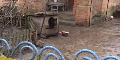 Депутат Брагар пообещал приехать к пенсионерке, которой посоветовал продать собаку