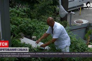 Новости Украины: кто этот мужчина, который спас собаку во время ливня в Киеве