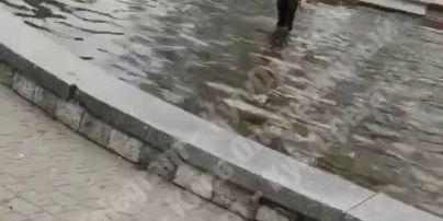 """Открыл """"пляжный"""" сезон: в фонтане ботанического сада Киева плавал мужчина (видео)"""