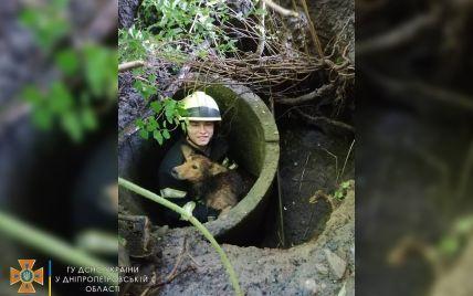 В Днепре сотрудники ГСЧС спасли собаку, которая упала в заброшенный колодец: фото