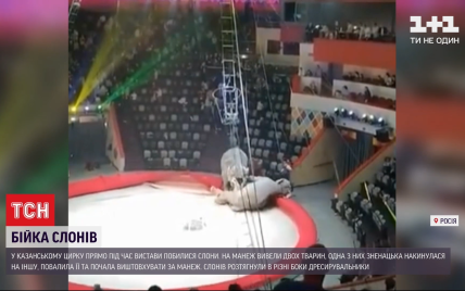 Глядачі перелякано відбігали: у російському цирку побились слони (відео)