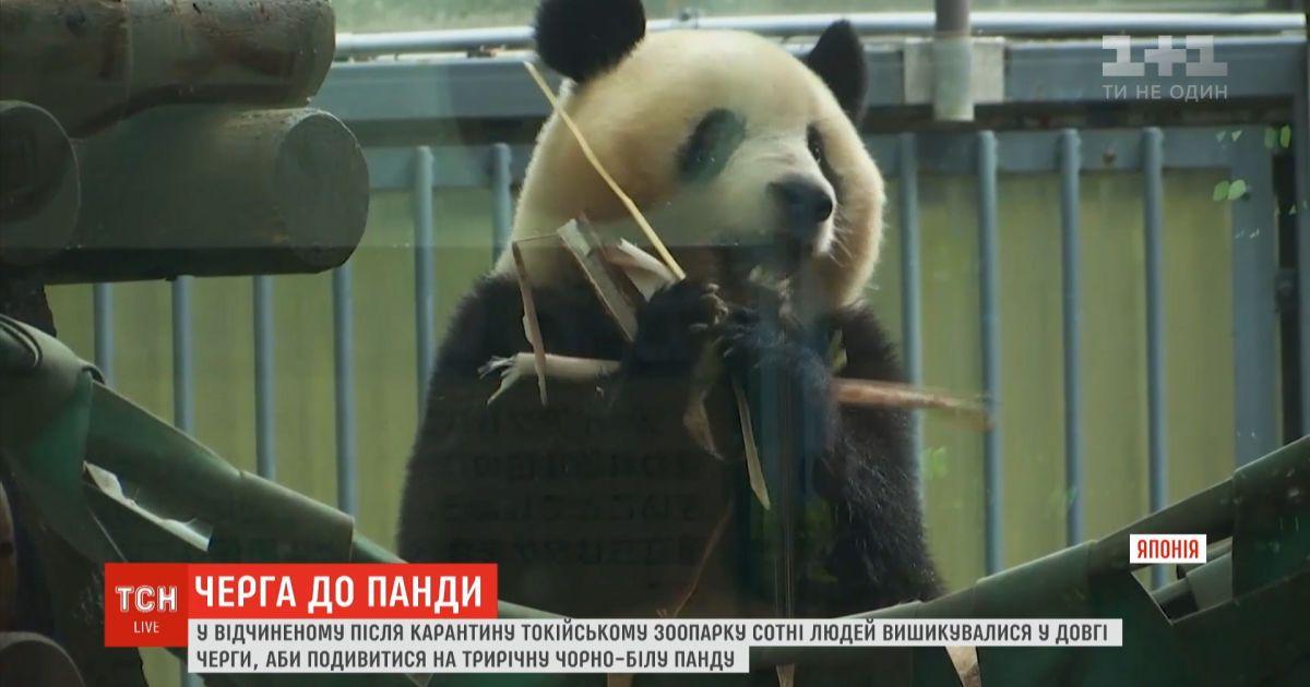 В Токийском зоопарке сотни посетителей пришли посмотреть на панду