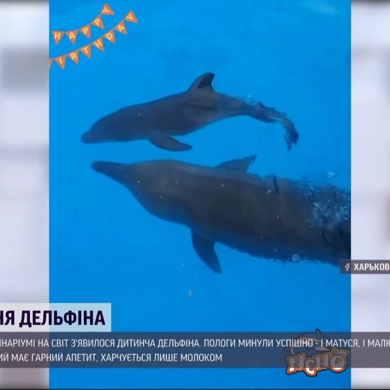 В харьковском дельфинарии радуются пополнению: пол детеныша держат в тайне