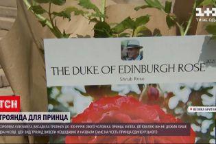 Новини світу: Єлизавета ІІ висадила троянду на згадку про свого чоловіка