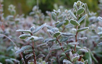 До Львівської області йдуть морози: очікується до мінус 3 градусів