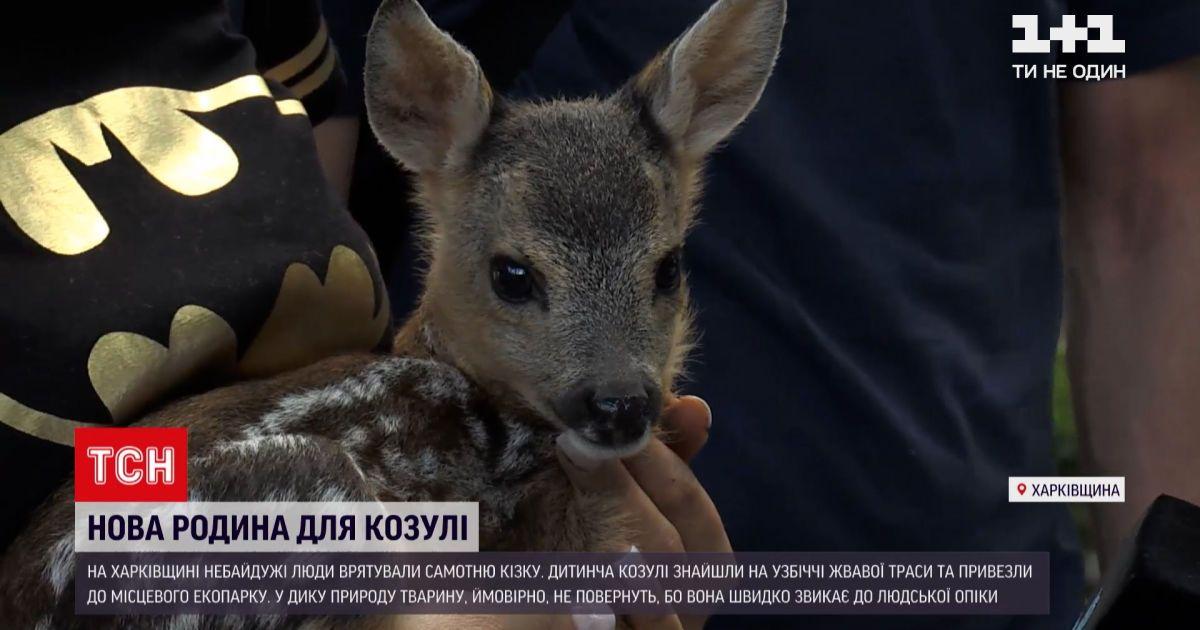 Новости Украины: найденную косулю будут откармливать молоком в харьковском экопарка