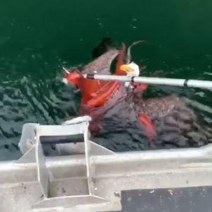 """Соцсети """"взорвало"""" видео, как огромный орел поймал осьминога и чуть не утонул"""