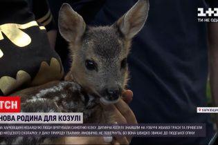 Новини України: знайдену козулю відгодовуватимуть молоком у харківському екопарку