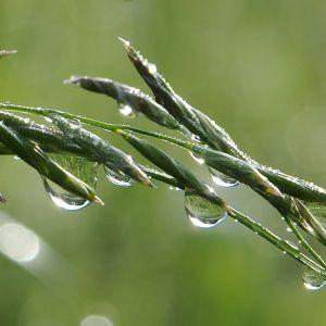 Погода в Украине: в большинство областей идет похолодание и дожди с грозами