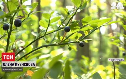 Війна за чорну ягоду: на Житомирщині селяни ополчилися проти збирачів із сусідньої області