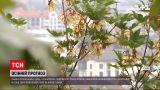 Погода в Україні: найближчим часом очікуються дощі та похолодання