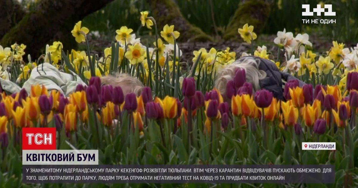 Новини світу: у знаменитому нідерландському парку Кекенгоф розквітли поля із тюльпанами