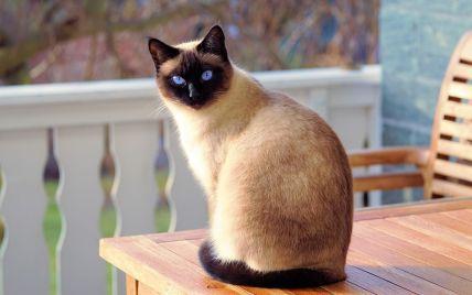 В Великобритании прожорливая кошка едва не сорвала свадьбу