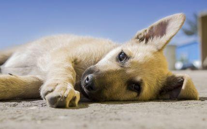 Обмотал шею веревкой, привязал к скамейке и забил до смерти: под Львовом убийца собаки проведет месяц за решеткой