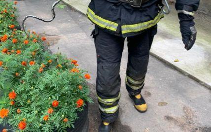 В Івано-Франківській області змія заповзла на територію житлового будинку: викликали рятувальників (фото)