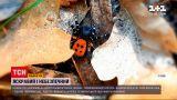 Новини України: у Києві сім'я натрапила на найотруйнішого павука