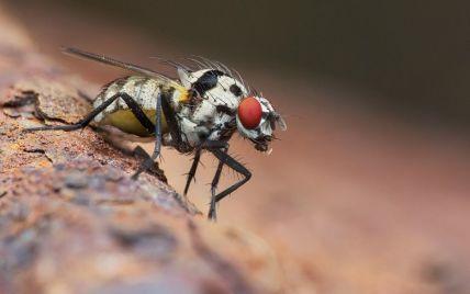 """""""Кості"""" падали 15 хвилин: у Німеччині муха завадила світовому рекорду в міні-доміно"""
