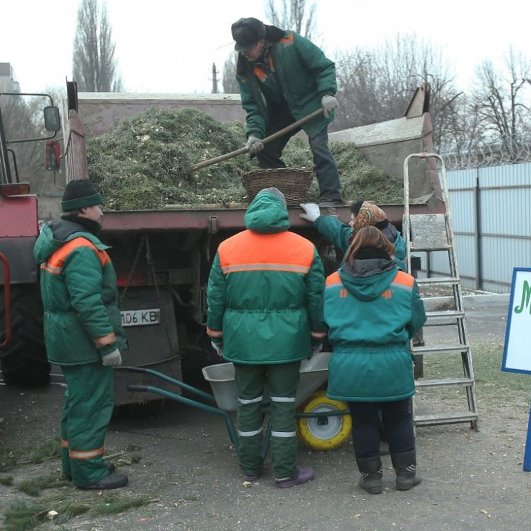 У Києві від 1 січня запрацюють пункти приймання новорічних ялинок