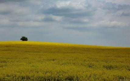 Рада ухвалила у першому читанні законопроєкт про відкриття в Україні ринку землі: що він передбачає