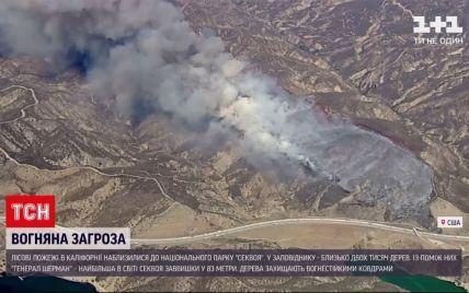 США продовжують атакувати лісові пожежі: вони загрожують унікальним деревам