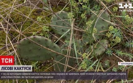 В Херсонской области посреди леса обнаружили кактусы: как они там оказались и чем это грозит