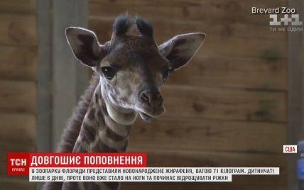 Во Флориде показали новорожденного жирафенка