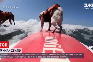 Новости мира: в Южной Калифорнии начались спортивные соревнования четвероногих серфингистов