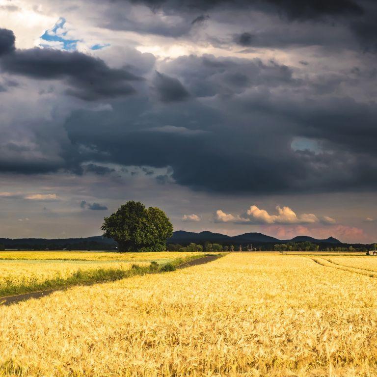 Град, дожди и грозы: какие регионы накроет непогода 15 июня