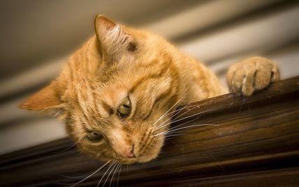 Жевал бумагу: в Нидерландах кот прожил без пищи почти два месяца