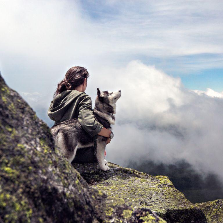 Власники собак менше за інших ризикують передчасно померти