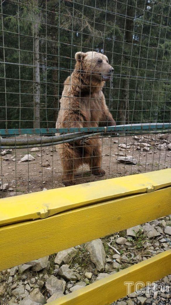 Реабілітаційний центр бурих ведмедів, фото: Ольга Кузьменко / ©