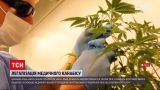 Новини України: позачергове засідання ВР – розглянуть легалізацію канабісу