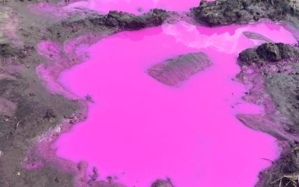 Утворилися яскраво-рожеві калюжі: під Рівним на поле вилили невідому рідину (фото)