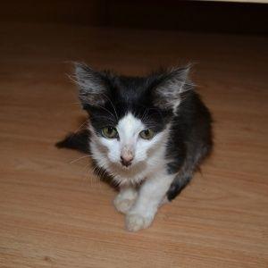 Умер котенок, над которым в Луцке жестоко издевались живодеры