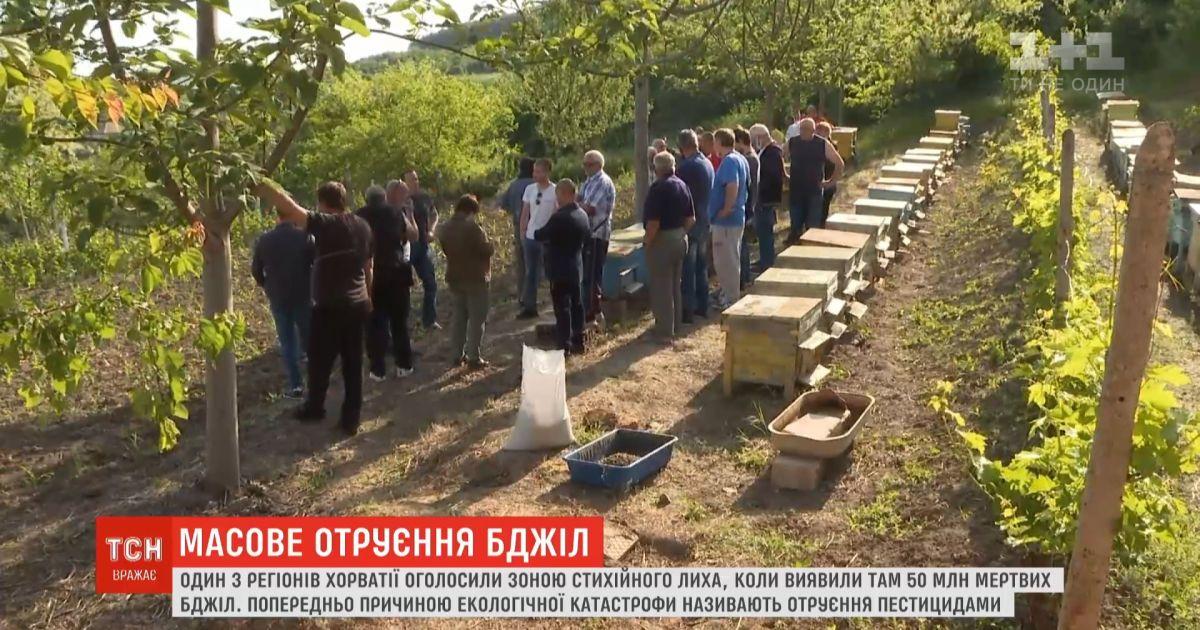 Регион Хорватии объявили зоной стихийного бедствия из-за гибели 50 миллионов пчел
