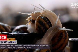 """Спецпроєкт """"Секрет ферми"""": як вирощують равликів та чому їхню ікру не купують в Україні"""
