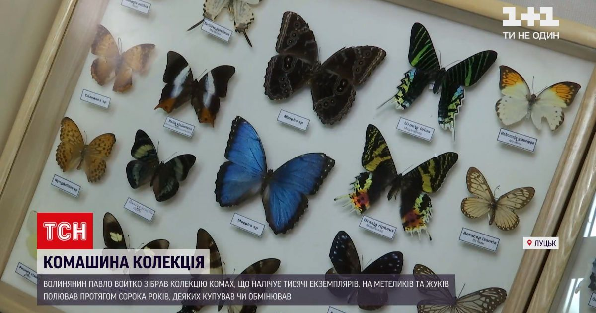 Новини України: волинянин зібрав величезну колекцію з метеликів