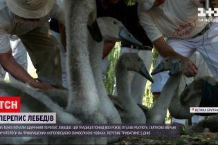 Новини світу: перепис лебедів у Британії - скільки птахів належить королеві