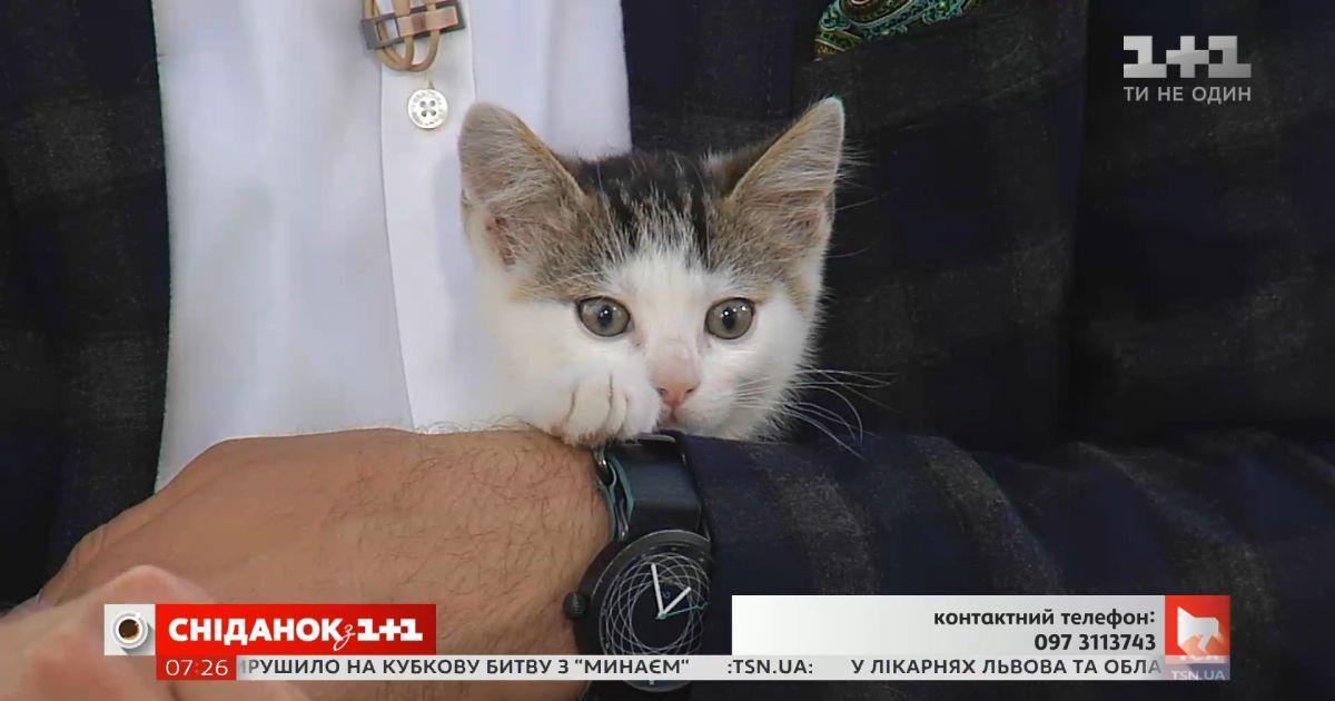 Трое игривых котят ищут заботливых хозяев