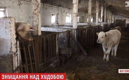 Фермер бросил десятки животных умирать голодной смертью на Житомирщине