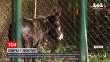 Новини України: у померлого поні з тернопільського зоокутка виявили сибірку