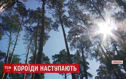Украина потеряла 400 тысяч гектаров лесов из-за короеда