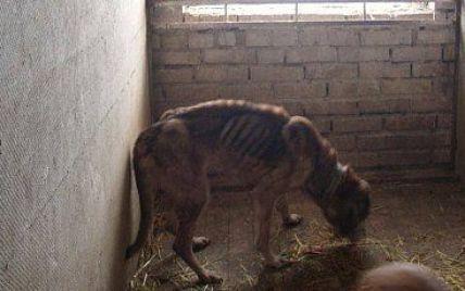 У Бородянці в притулку для тварин від голоду гинуть більше сотні собак