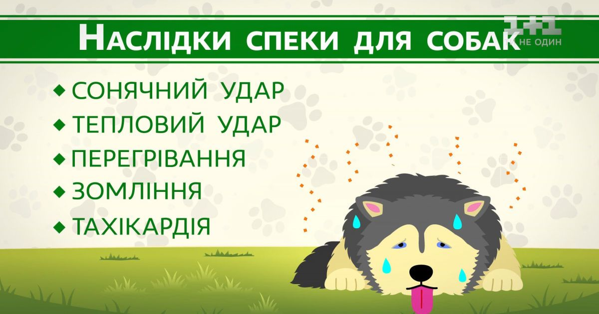 Как защитить собаку от перегрева и теплового удара – советы ветеринара
