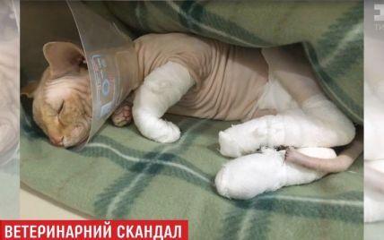 """У Києві ветеринарів винуватять у """"підсмажуванні"""" кота після операції"""