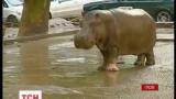 Тбилиси в ночь на воскресенье накрыло наводнение, а из зоопарка сбежали дикие звери